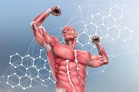 Se pretendemos atingir um nível de intensidade de esforço muscular elevado é necessário haver esta fadiga progressiva das fibras lentas para posteriormente recrutar as de contração rápida.